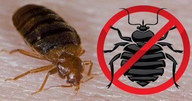 Get Rid Of Bed Bugs Permanently
