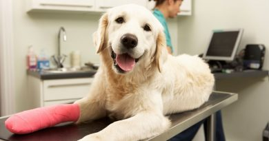Pet Insurance For Dogs
